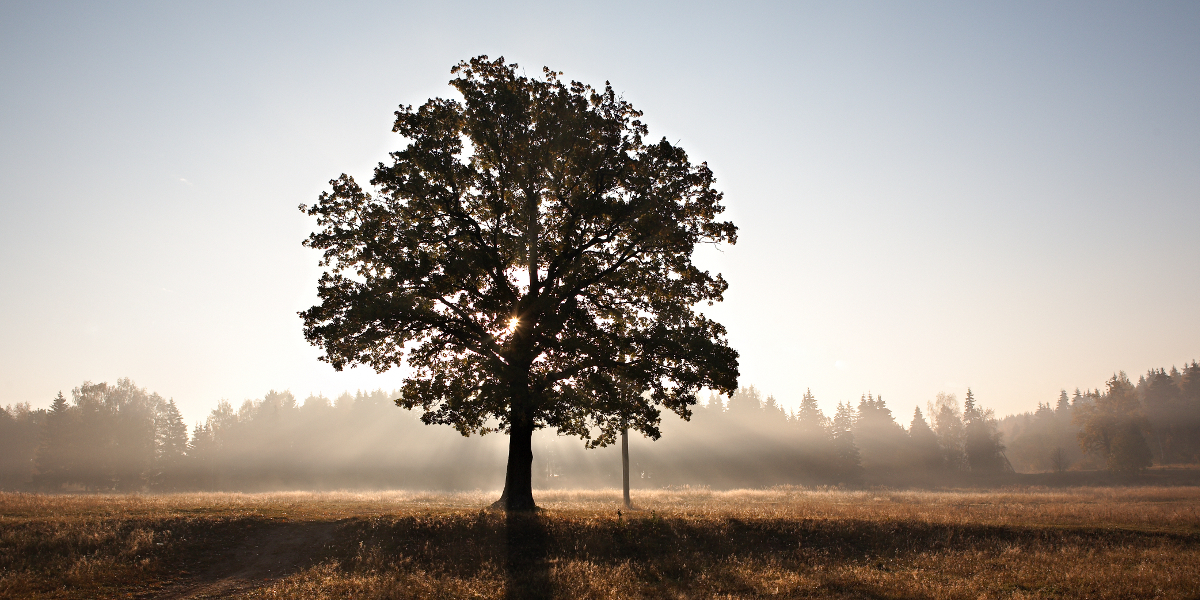 Preocupado por una sola hoja no verás el árbol