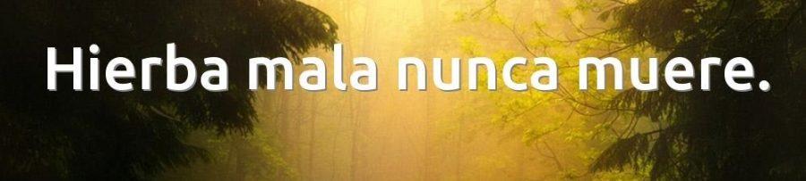 Significado de【 Hierba mala nunca muere 】
