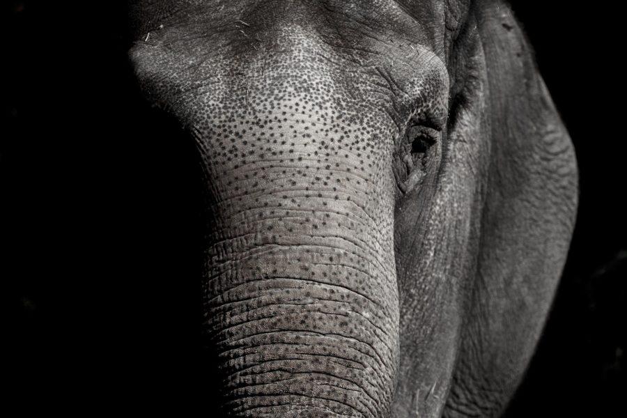 18 El elefante encadenado